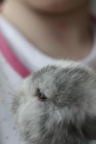 Close up of rabbit being held by young girl