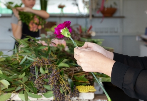 Closeup of a person' s preparing a carnation for display with worker and flowers blur in background