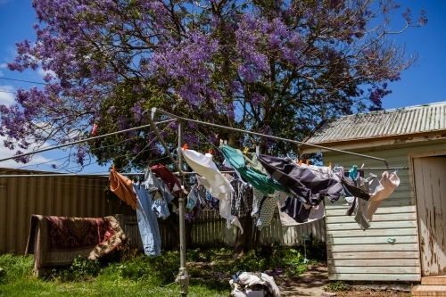 Clothing of different colours, dry in the wind on a hills hoist clothes line on by a jacaranda tree.