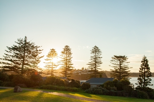 Pine trees beside water and beach at sunset in Kiama