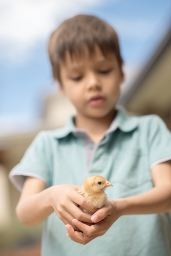 Cute boy holding his pet backyard chicken in the backyard of his suburban home