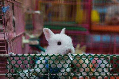 Cute white bunny for sale in pet shop