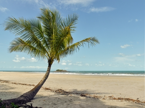 Palm tree overhanging a tropical beach