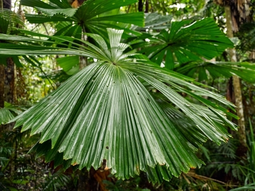 Tropical palm in a rainforest