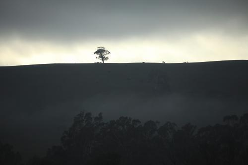 Dark sunrise across ridge with isolated tree