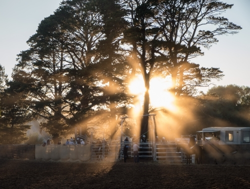 Dawn sunburst of light through trees and dust at country rodeo