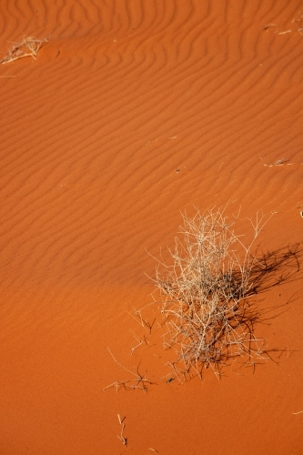 dead plant stems in red sand dune