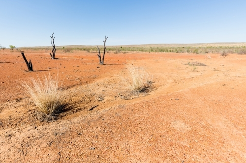 Dead trees and spinifex grass in red dirt, outback Australia
