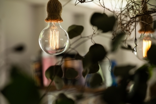 Decorative tungsten bulb with large filaments with blurred background