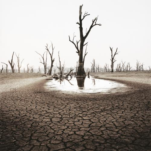 Desolate landscape with dead trees and cracked earth