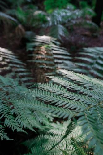 Detail of Fern in forest