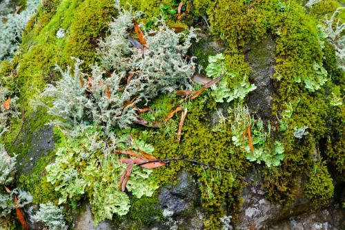 Detail shot of lichens and mosses with varying shades of green