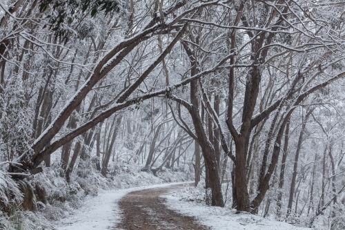 Dirt road through forest after snowfall