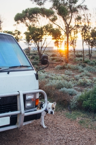 Dog standing near camper van at sunrise