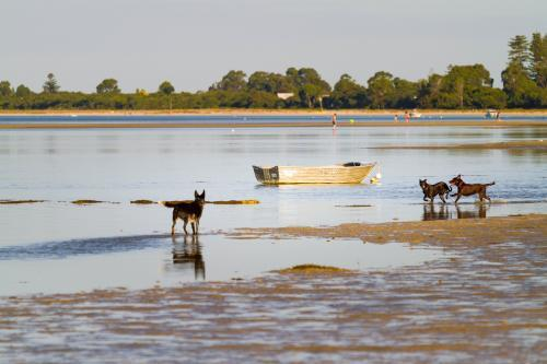 Dogs and Dinghy on the beach