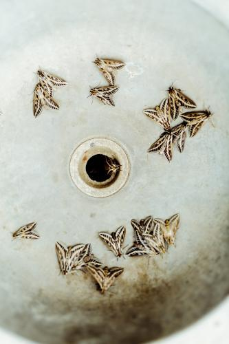 Drain of Outdoor Sink crawling with wild moths