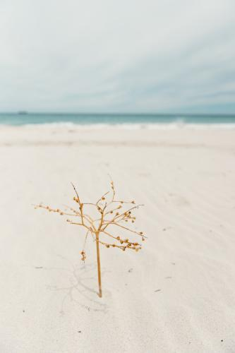 Dried beach plant twig set in sand like a tree at the beach in summer