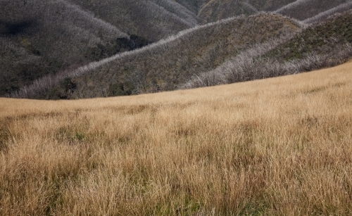 Dry grassland and burnt tree ridges in the mountains