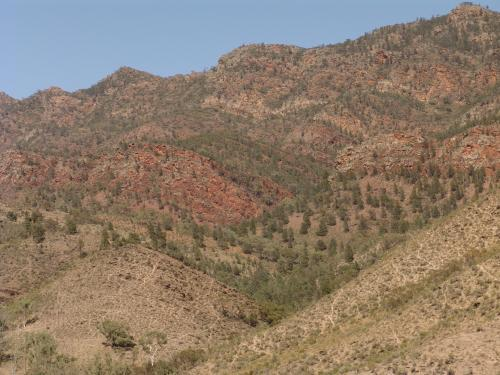 Dry, sparsely covered hillside of Elder Range
