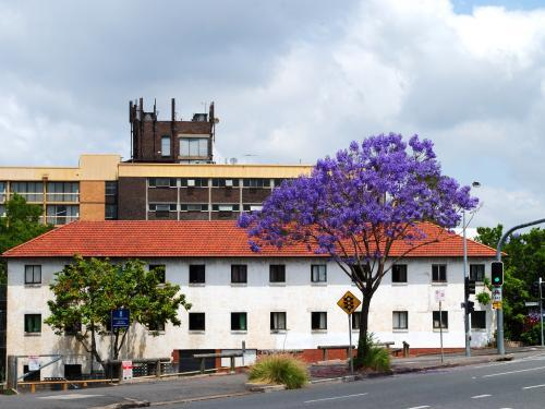 Blooming jacaranda tree in Spring Hill, Brisbane