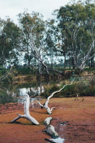 Fallen dead tree submerged in wetlands surrounded by gumtrees