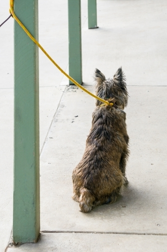 A scruffy dog with its lead tied to a verandah post