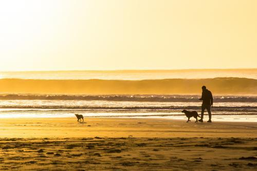 A man walking his two dogs on a beach at sunrise.