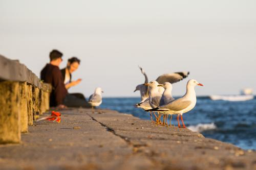 Seagulls sitting on a seawall with a couple of people in the background