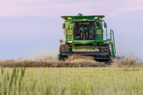 Head on view of a harvester working in a paddock at twilight