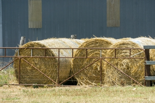 Round hay bales sit behind a gate in a farm yard