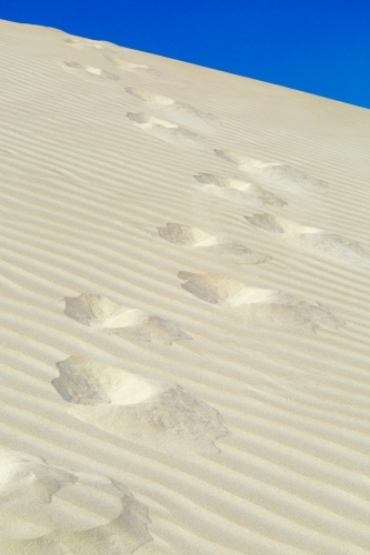 Footprints and ripples along a sand dune