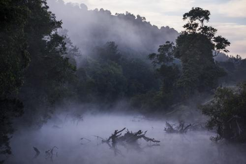 Early morning fog rises through the trees over the Mary River