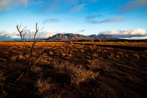 early morning light on plains with wilpena pound in background