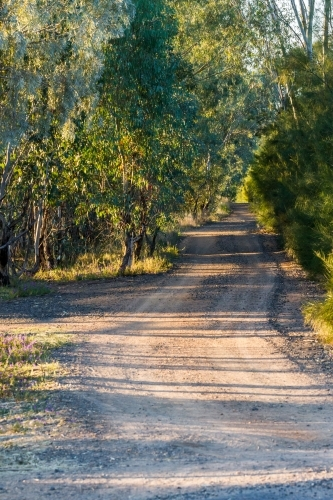 Early morning sun dappled country dirt road