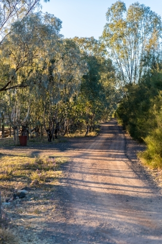 Early morning sun dappled country dirt road with blue sky