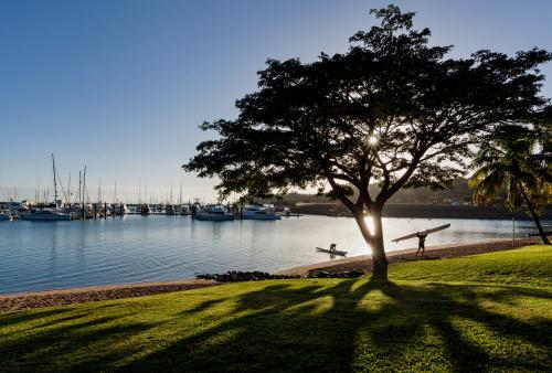 Early morning sunlight shines through tree beside water and boats