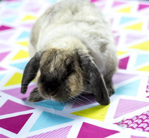 Easter Bunny rabbit on colourful blanket