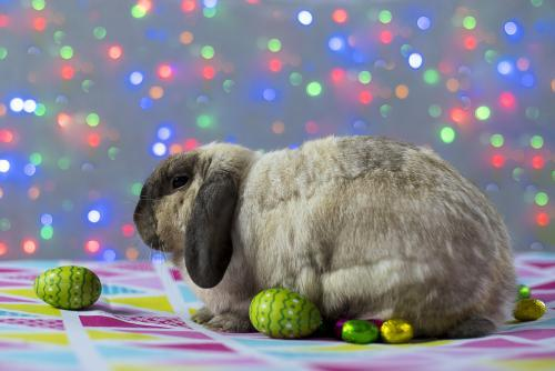 Easter Bunny Rabbit with easter eggs and coloured lights in background