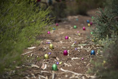 Easter egg hunt in Australian Bush
