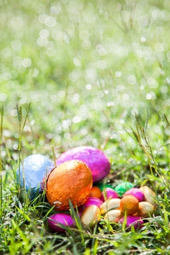 Colourful foil wrapped Easter eggs on green grass wet with dew