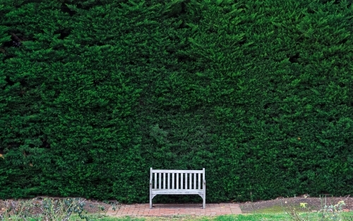 Empty park bench with a green hedge background