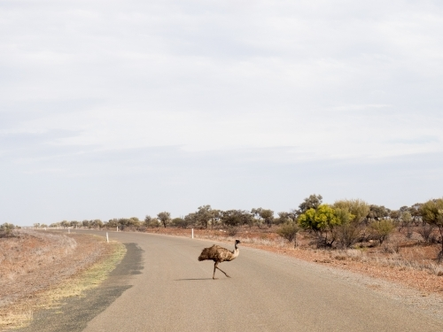 Emu Crossing Road