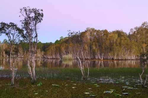 Evening pastels bathing the wetlands at Ewen Maddock Dam
