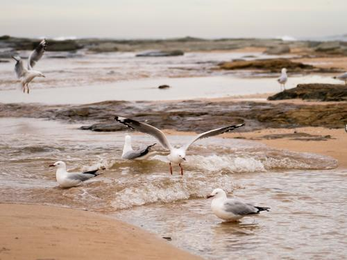 Seagulls among rocks with a small incoming wave on the beach