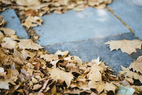 Fallen Autumn leaves on concrete background