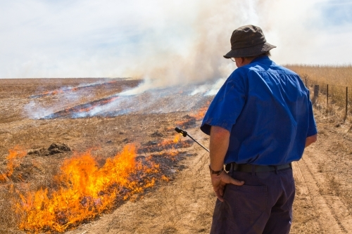 Farmer carrying a fire lighter burning canola stubble