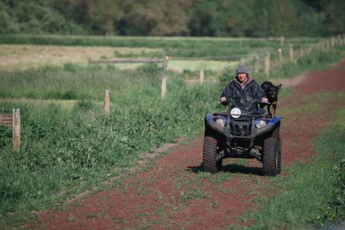 Farmer riding quad bike with his dogs