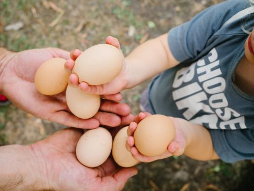 Father and daughter holding eggs