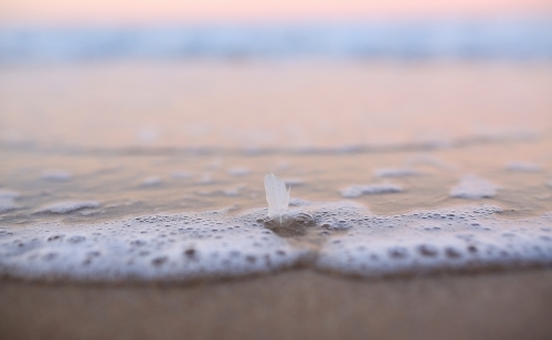 Feather in the water