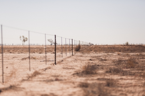 Fence line in a drought paddock